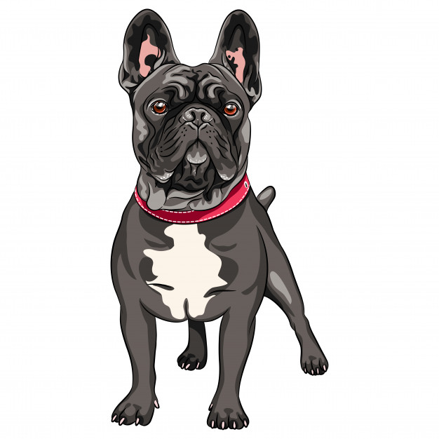vector-black-dog-french-bulldog-breed-standing-most-common-colouring_218319-2091.jpg